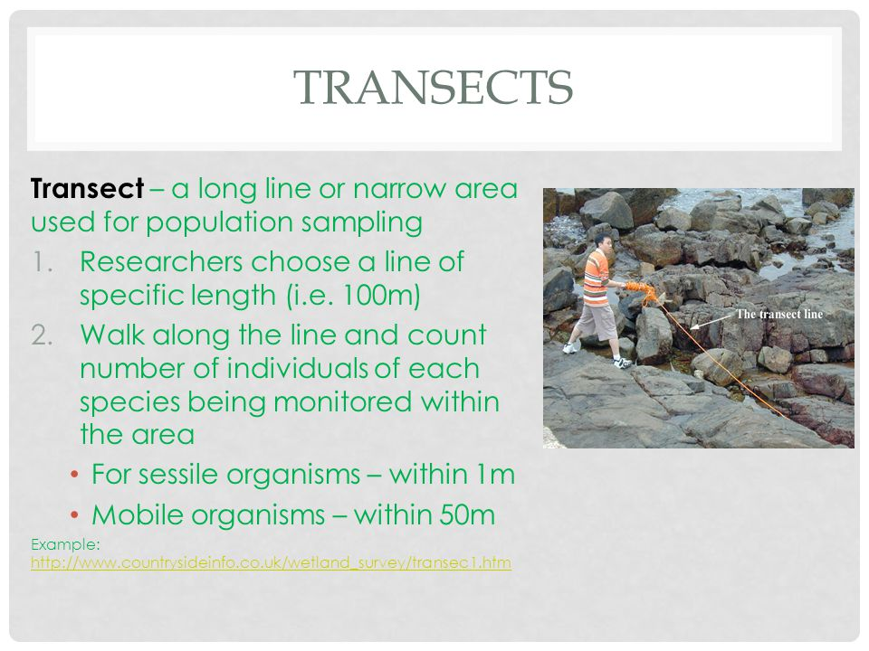 TRANSECTS Transect – a long line or narrow area used for population sampling 1.Researchers choose a line of specific length (i.e. 100m) 2.Walk along t