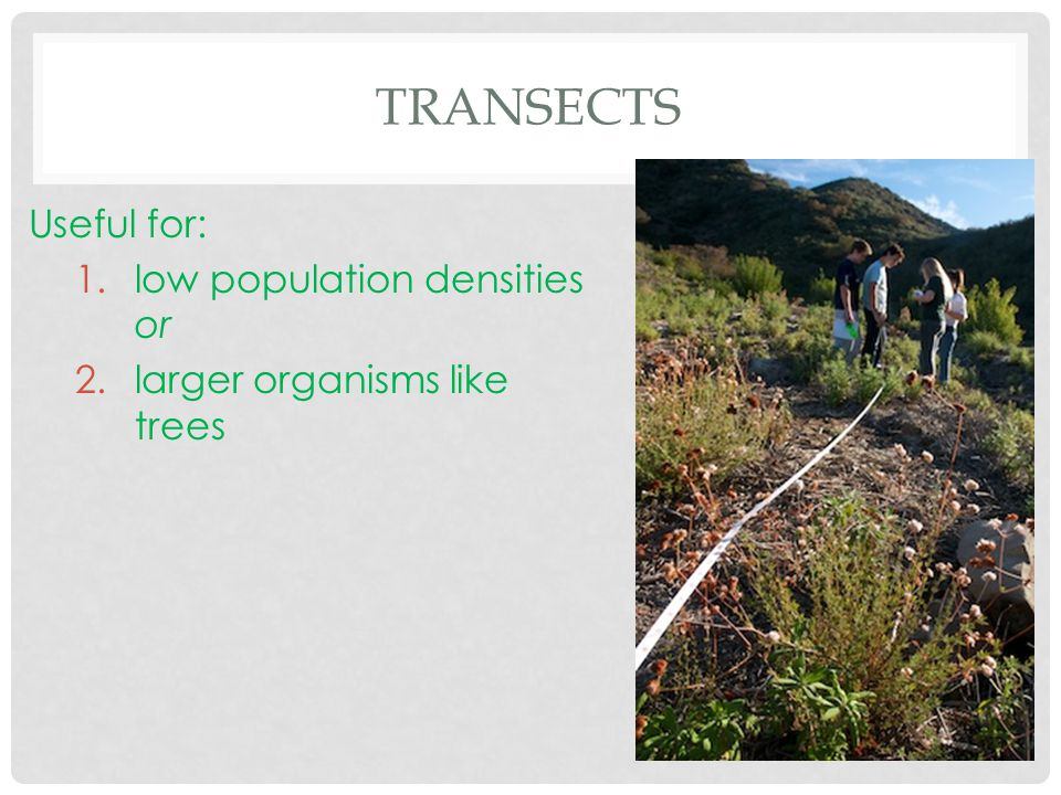 TRANSECTS Useful for: 1.low population densities or 2.larger organisms like trees