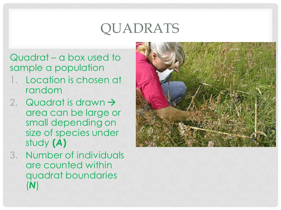 QUADRATS Quadrat – a box used to sample a population 1.Location is chosen at random 2.Quadrat is drawn  area can be large or small depending on size of species under study ( A ) 3.Number of individuals are counted within quadrat boundaries ( N )