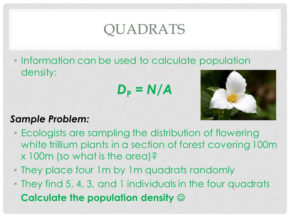 QUADRATS Information can be used to calculate population density: D P = N / A Sample Problem: Ecologists are sampling the distribution of flowering wh