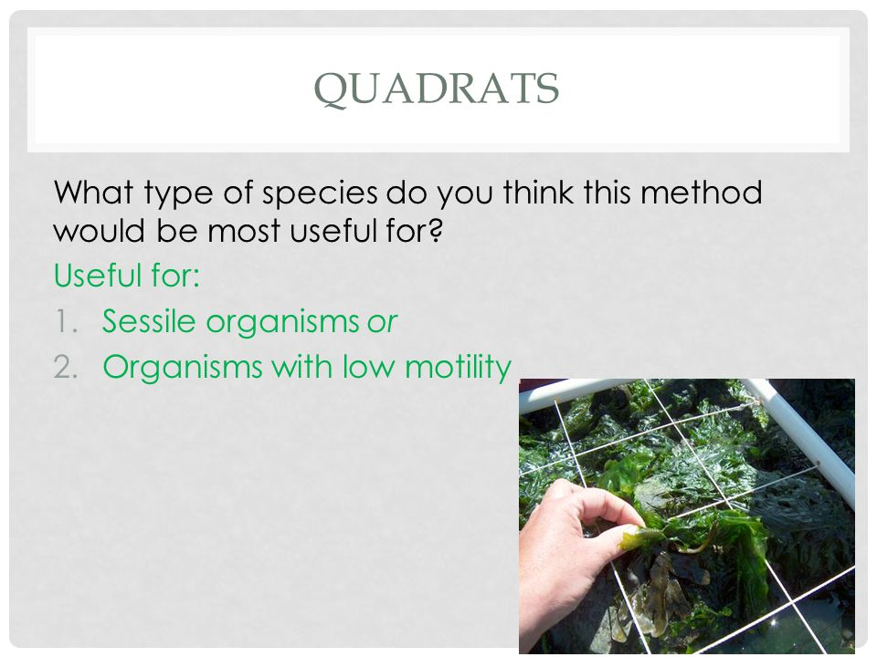 QUADRATS What type of species do you think this method would be most useful for? Useful for: 1.Sessile organisms or 2.Organisms with low motility