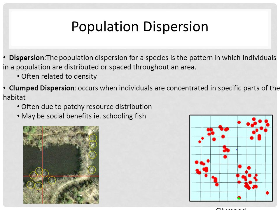 Population Dispersion Dispersion:The population dispersion for a species is the pattern in which individuals in a population are distributed or spaced throughout an area.