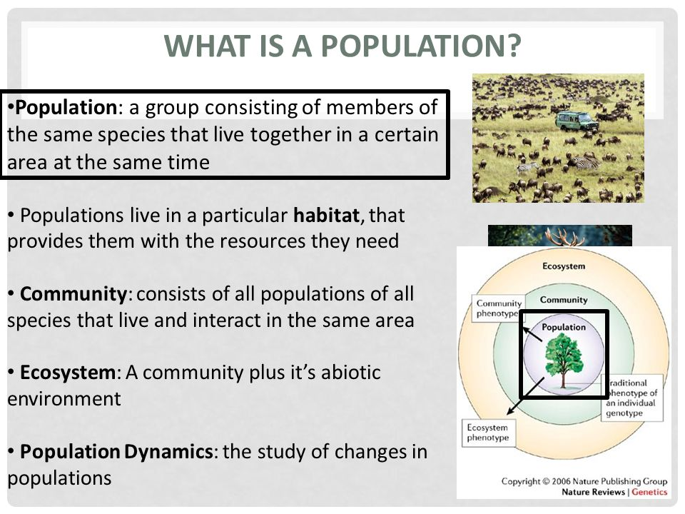 WHAT IS A POPULATION? Population: a group consisting of members of the same species that live together in a certain area at the same time Populations