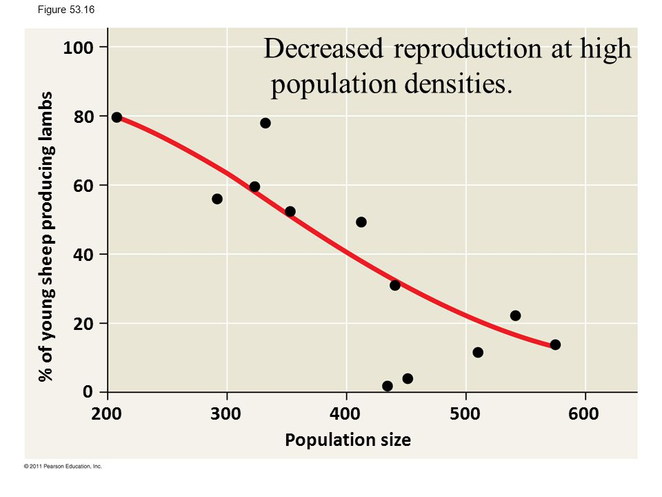 Figure 53.16 Population size % of young sheep producing lambs 200300400500600 100 80 60 40 20 0 Decreased reproduction at high population densities.