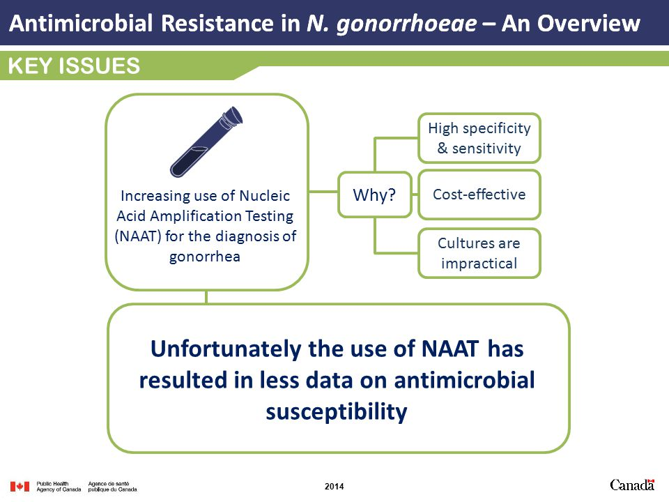 Antimicrobial Resistance in N.