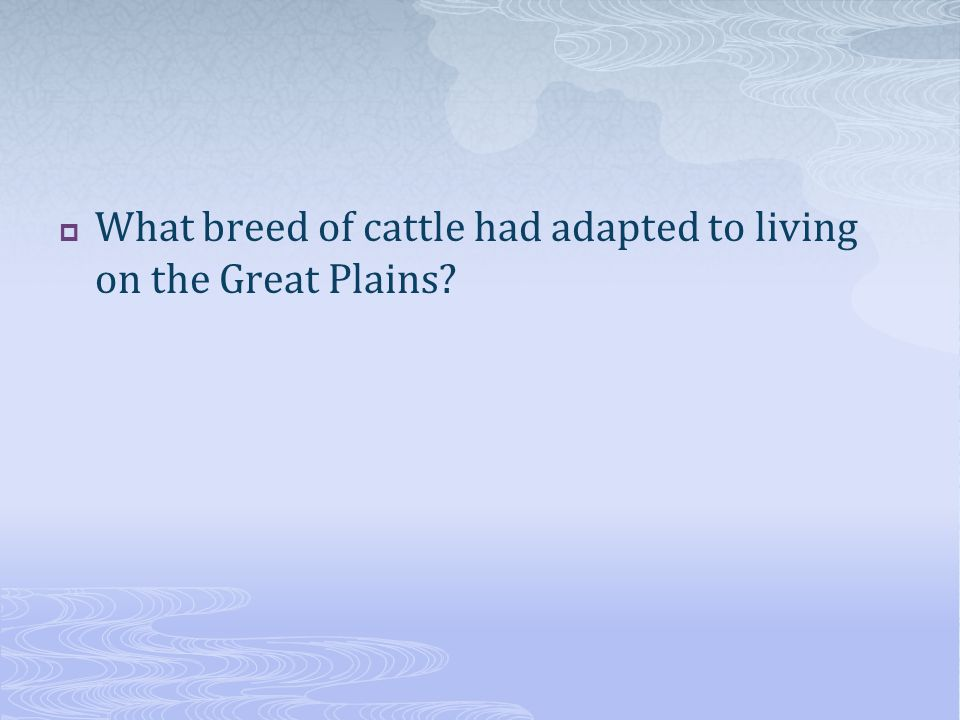  What breed of cattle had adapted to living on the Great Plains?