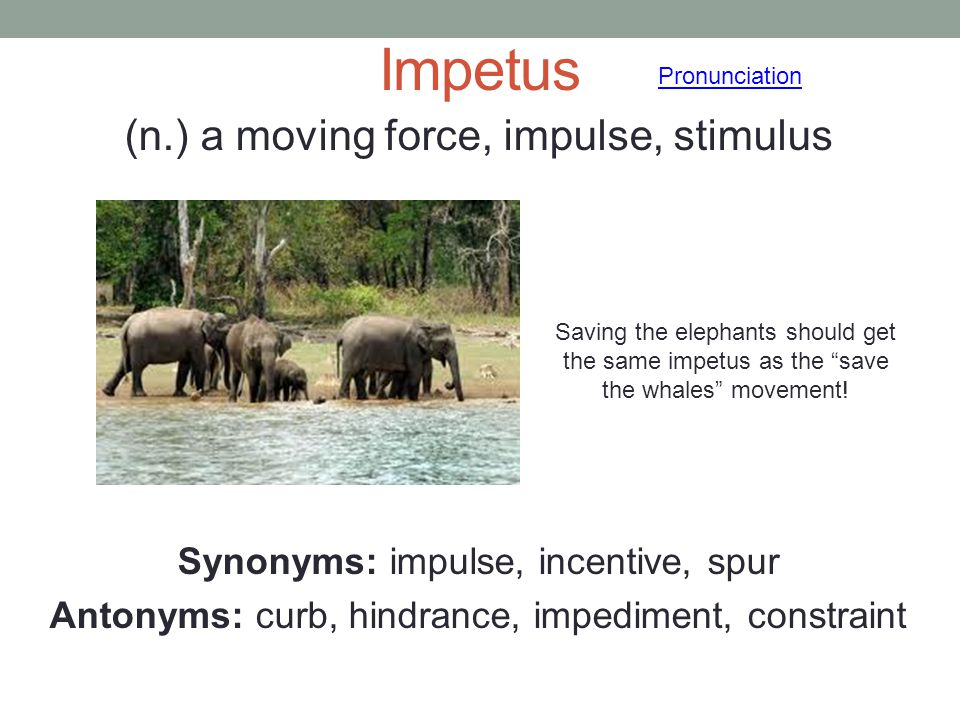 Impetus (n.) a moving force, impulse, stimulus Synonyms: impulse, incentive, spur Antonyms: curb, hindrance, impediment, constraint Pronunciation Savi