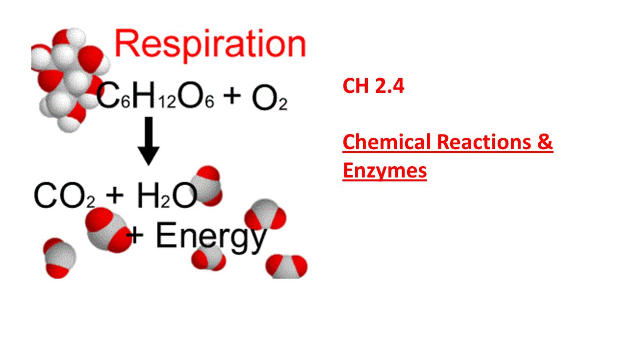 CH 2.4 Chemical Reactions & Enzymes