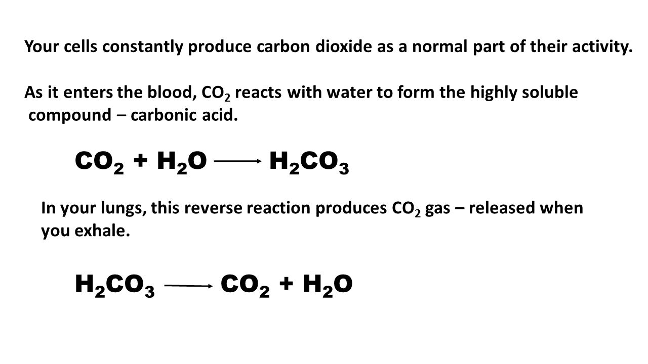 CO 2 + H 2 O H 2 CO 3 H 2 CO 3 CO 2 + H 2 O Your cells constantly produce carbon dioxide as a normal part of their activity. As it enters the blood, C