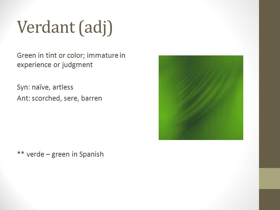 Verdant (adj) Green in tint or color; immature in experience or judgment Syn: naïve, artless Ant: scorched, sere, barren ** verde – green in Spanish