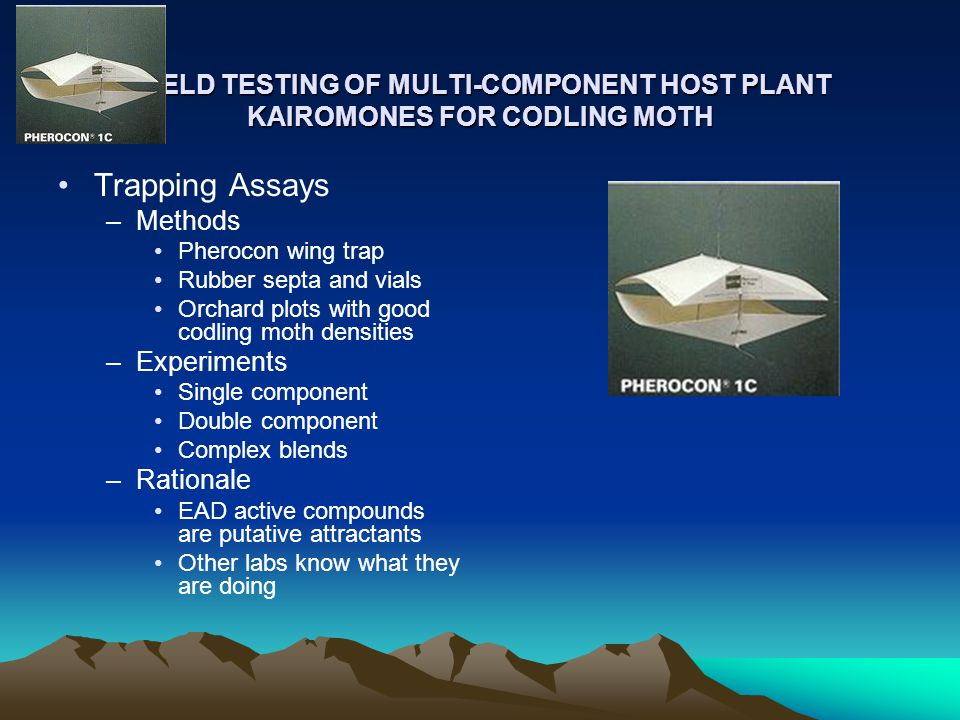 FIELD TESTING OF MULTI-COMPONENT HOST PLANT KAIROMONES FOR CODLING MOTH FIELD TESTING OF MULTI-COMPONENT HOST PLANT KAIROMONES FOR CODLING MOTH Trapping Assays –Methods Pherocon wing trap Rubber septa and vials Orchard plots with good codling moth densities –Experiments Single component Double component Complex blends –Rationale EAD active compounds are putative attractants Other labs know what they are doing