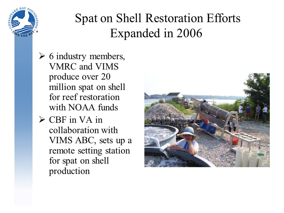Spat on Shell Restoration Efforts Expanded in 2006  6 industry members, VMRC and VIMS produce over 20 million spat on shell for reef restoration with NOAA funds  CBF in VA in collaboration with VIMS ABC, sets up a remote setting station for spat on shell production