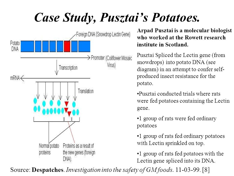 Case Study, Pusztai's Potatoes.
