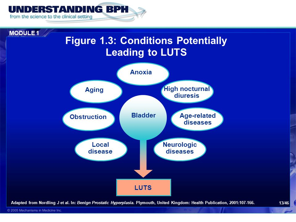 MODULE 1 13/46 Adapted from Nordling J et al.In: Benign Prostatic Hyperplasia.