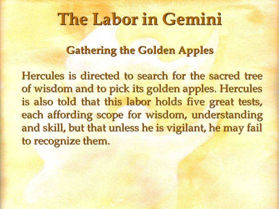 The Labor in Gemini Gathering the Golden Apples Hercules is directed to search for the sacred tree of wisdom and to pick its golden apples.