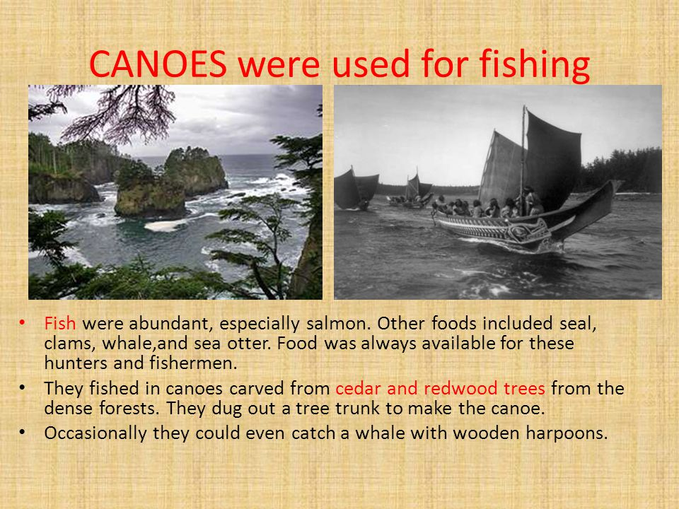 CANOES were used for fishing Fish were abundant, especially salmon. Other foods included seal, clams, whale,and sea otter. Food was always available f