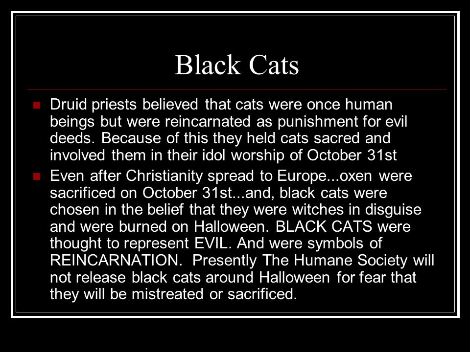 Black Cats Druid priests believed that cats were once human beings but were reincarnated as punishment for evil deeds.