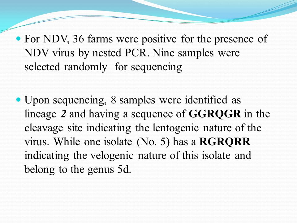 For NDV, 36 farms were positive for the presence of NDV virus by nested PCR.