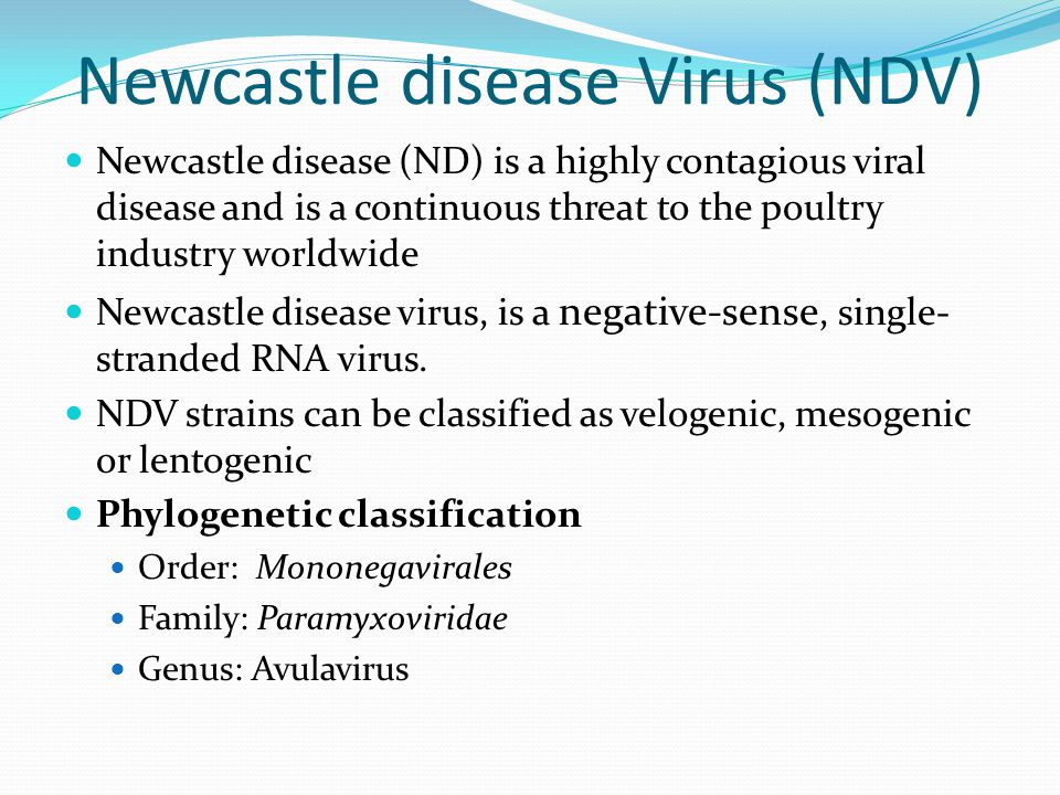 Newcastle disease Virus (NDV) Newcastle disease (ND) is a highly contagious viral disease and is a continuous threat to the poultry industry worldwide Newcastle disease virus, is a negative-sense, single- stranded RNA virus.