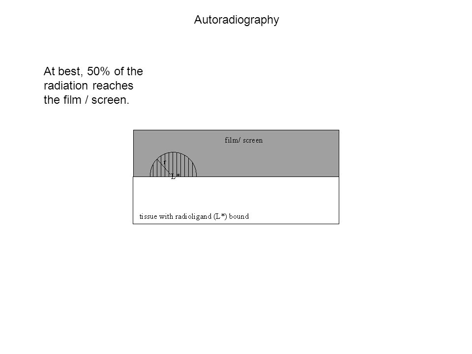 At best, 50% of the radiation reaches the film / screen. Autoradiography