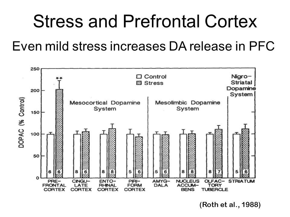 Even mild stress increases DA release in PFC Stress and Prefrontal Cortex (Roth et al., 1988)