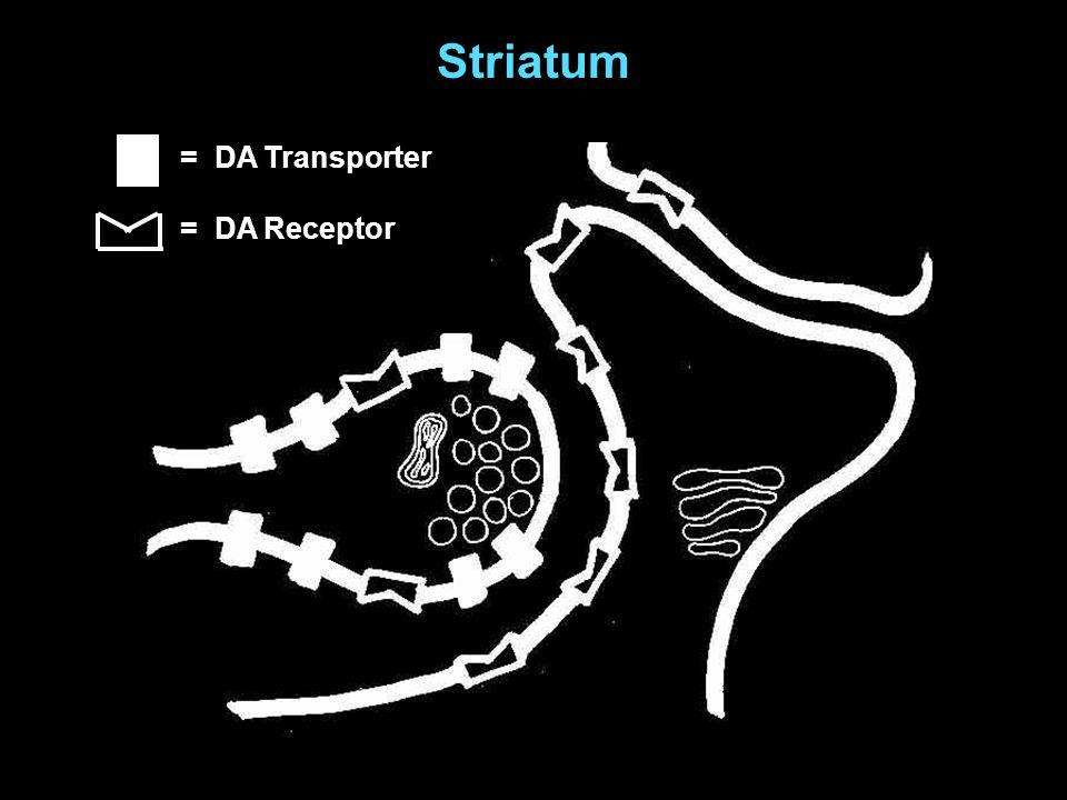 Striatum = DA Transporter = DA Receptor