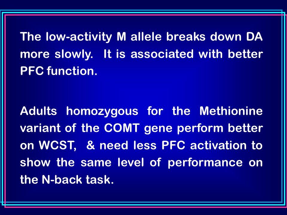 The low-activity M allele breaks down DA more slowly.