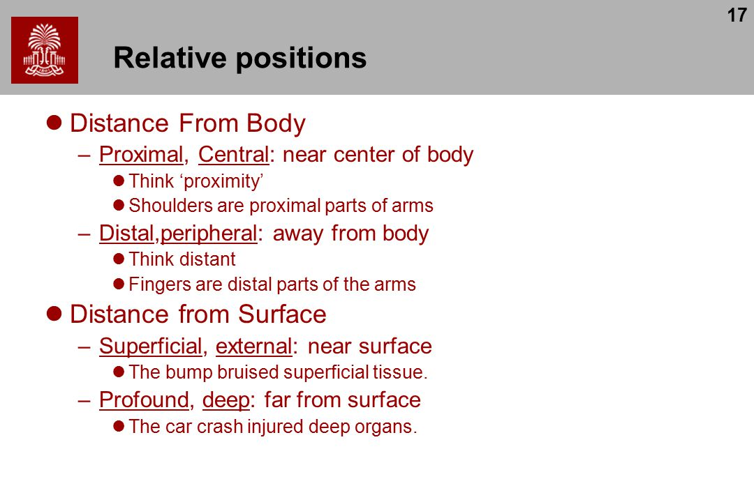 17 Relative positions Distance From Body –Proximal, Central: near center of body Think 'proximity' Shoulders are proximal parts of arms –Distal,peripheral: away from body Think distant Fingers are distal parts of the arms Distance from Surface –Superficial, external: near surface The bump bruised superficial tissue.