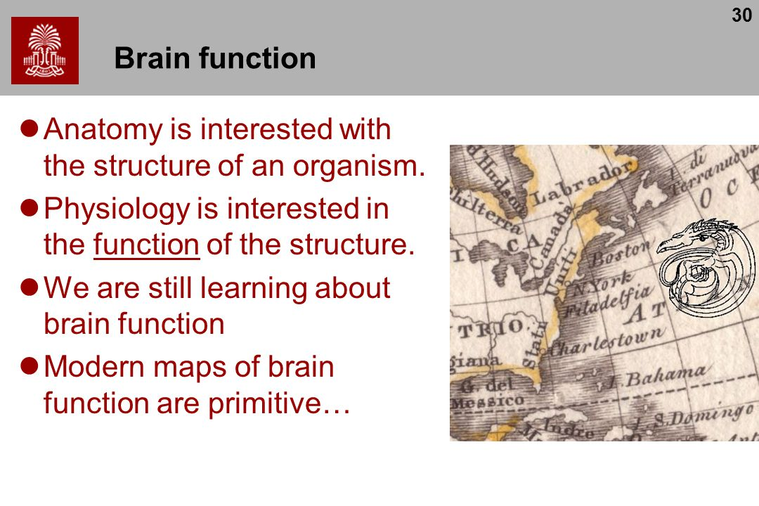30 Brain function Anatomy is interested with the structure of an organism.