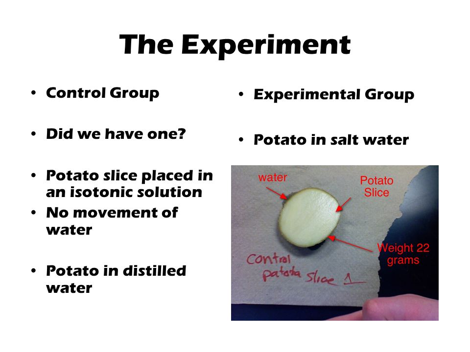 The Experiment Control Group Did we have one.