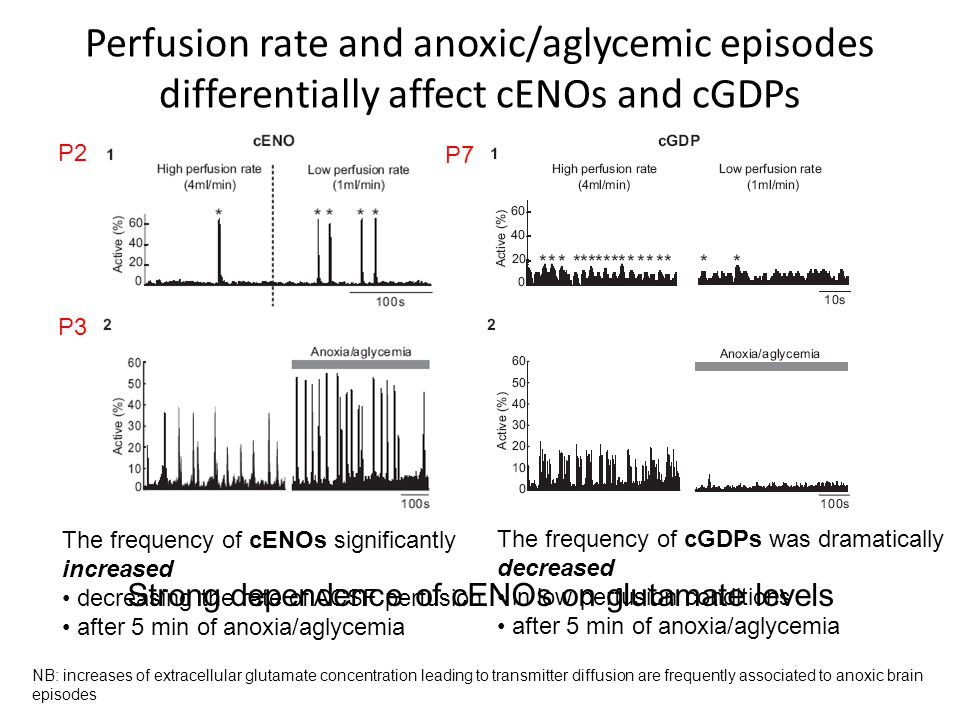 Perfusion rate and anoxic/aglycemic episodes differentially affect cENOs and cGDPs The frequency of cENOs significantly increased decreasing the rate of ACSF perfusion after 5 min of anoxia/aglycemia P3 P2 P7 The frequency of cGDPs was dramatically decreased in low perfusion conditions after 5 min of anoxia/aglycemia NB: increases of extracellular glutamate concentration leading to transmitter diffusion are frequently associated to anoxic brain episodes Strong dependence of cENOs on glutamate levels