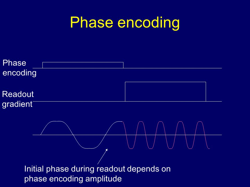 Phase encoding Phase encoding Readout gradient Initial phase during readout depends on phase encoding amplitude