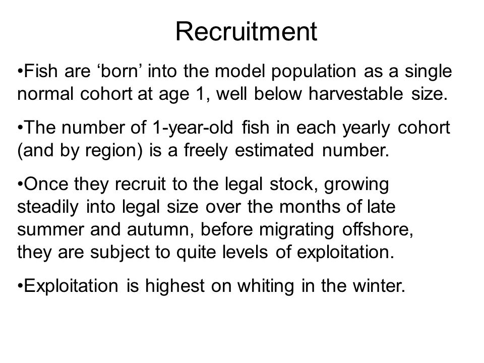 Recruitment Fish are 'born' into the model population as a single normal cohort at age 1, well below harvestable size.