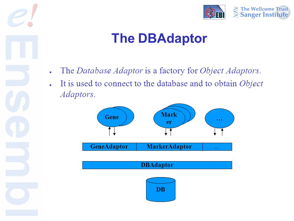 The DBAdaptor ● The Database Adaptor is a factory for Object Adaptors.