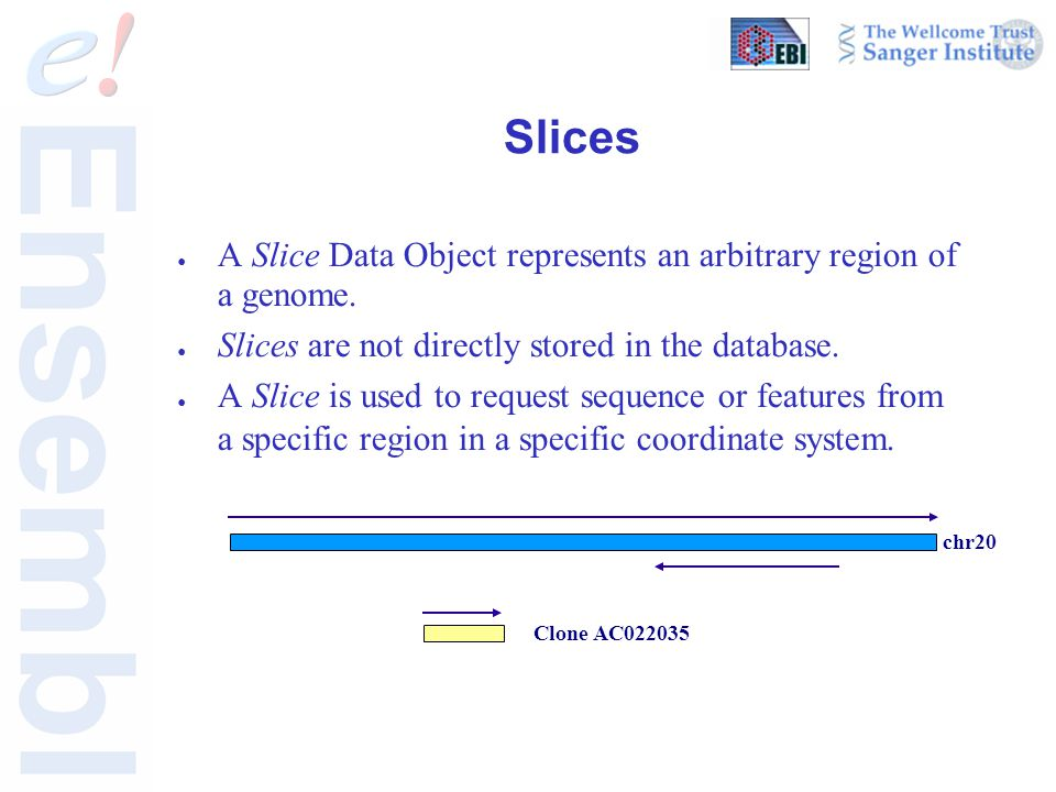 Slices ● A Slice Data Object represents an arbitrary region of a genome.