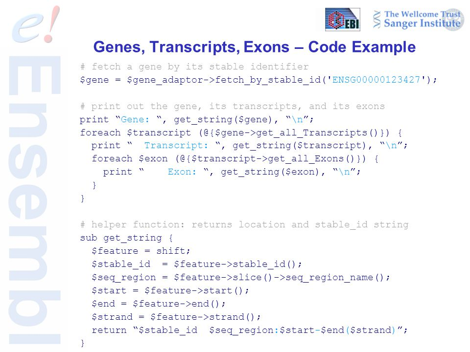 Genes, Transcripts, Exons – Code Example # fetch a gene by its stable identifier $gene = $gene_adaptor->fetch_by_stable_id('ENSG00000123427'); # print