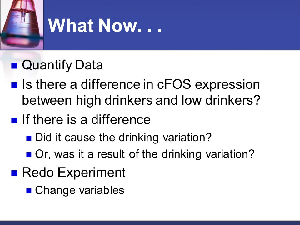 What Now... Quantify Data Is there a difference in cFOS expression between high drinkers and low drinkers? If there is a difference Did it cause the d