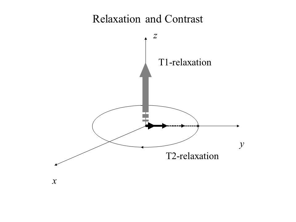 x z y Relaxation and Contrast T1-relaxation T2-relaxation
