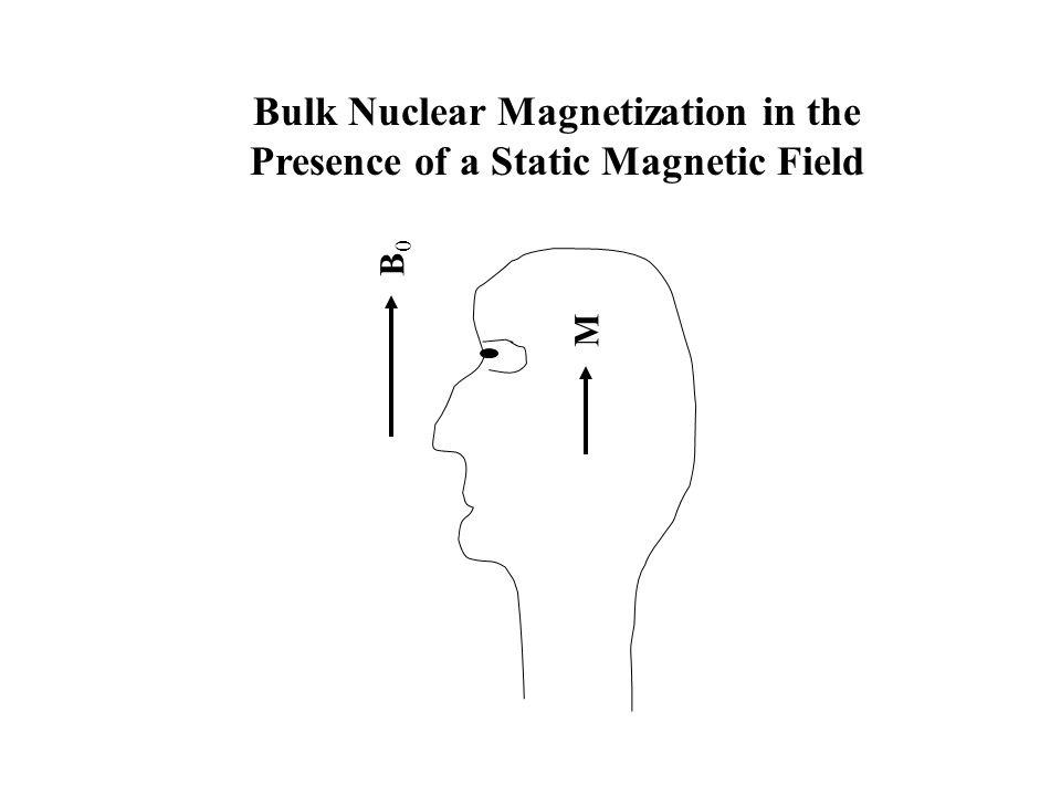 B0B0 M Bulk Nuclear Magnetization in the Presence of a Static Magnetic Field
