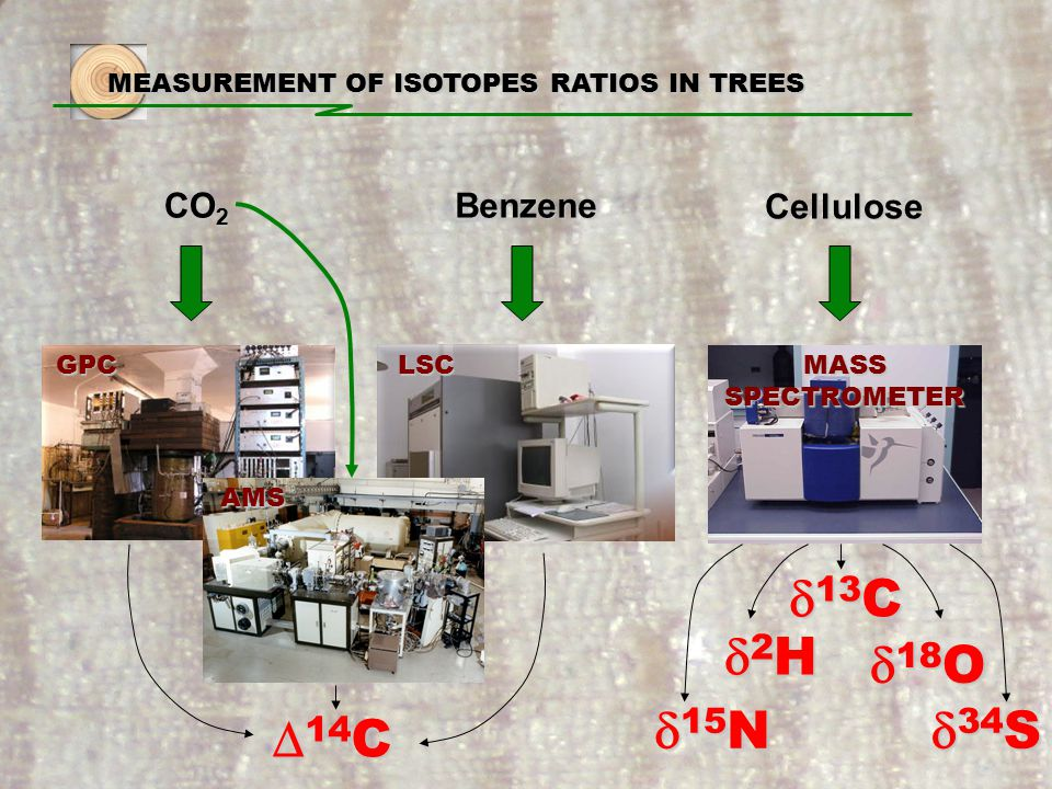 MEASUREMENT OF ISOTOPES RATIOS IN TREES CO 2 Benzene Cellulose GPCLSC AMS  14 C  13 C 2H2H2H2H  34 S  18 O  15 N MASS SPECTROMETER