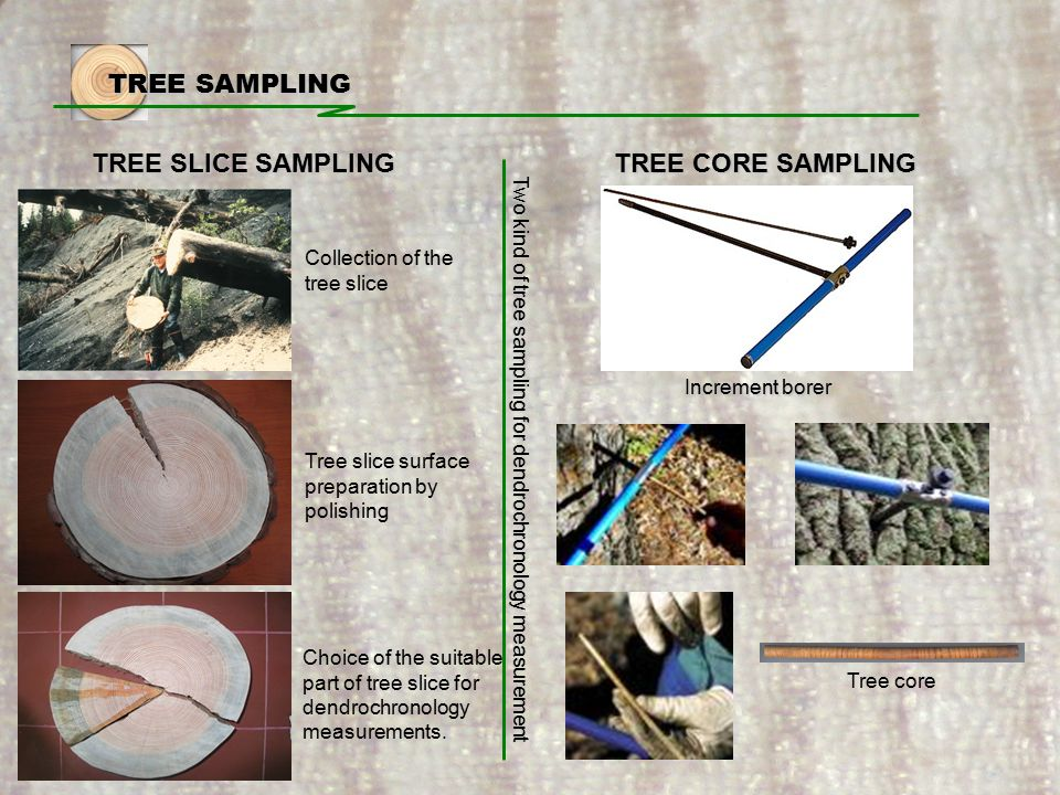 TREE SAMPLING TREE SLICE SAMPLING Increment borer Collection of the tree slice Tree slice surface preparation by polishing Choice of the suitable part of tree slice for dendrochronology measurements.