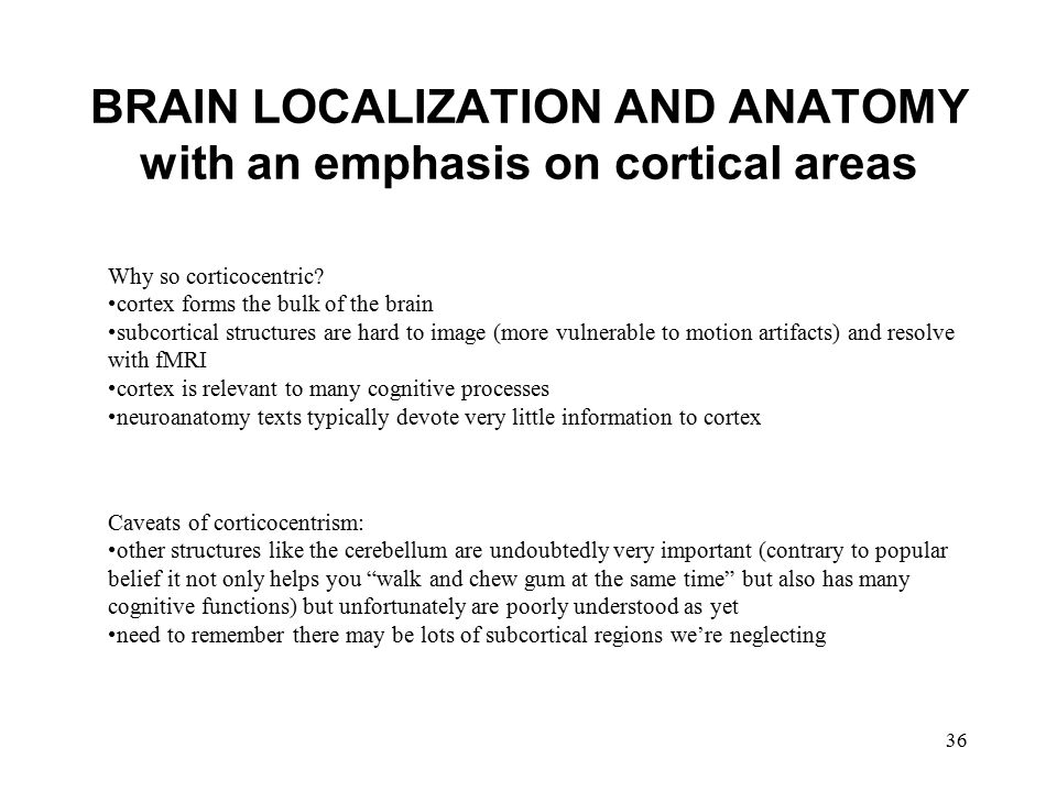 36 BRAIN LOCALIZATION AND ANATOMY with an emphasis on cortical areas Why so corticocentric? cortex forms the bulk of the brain subcortical structures