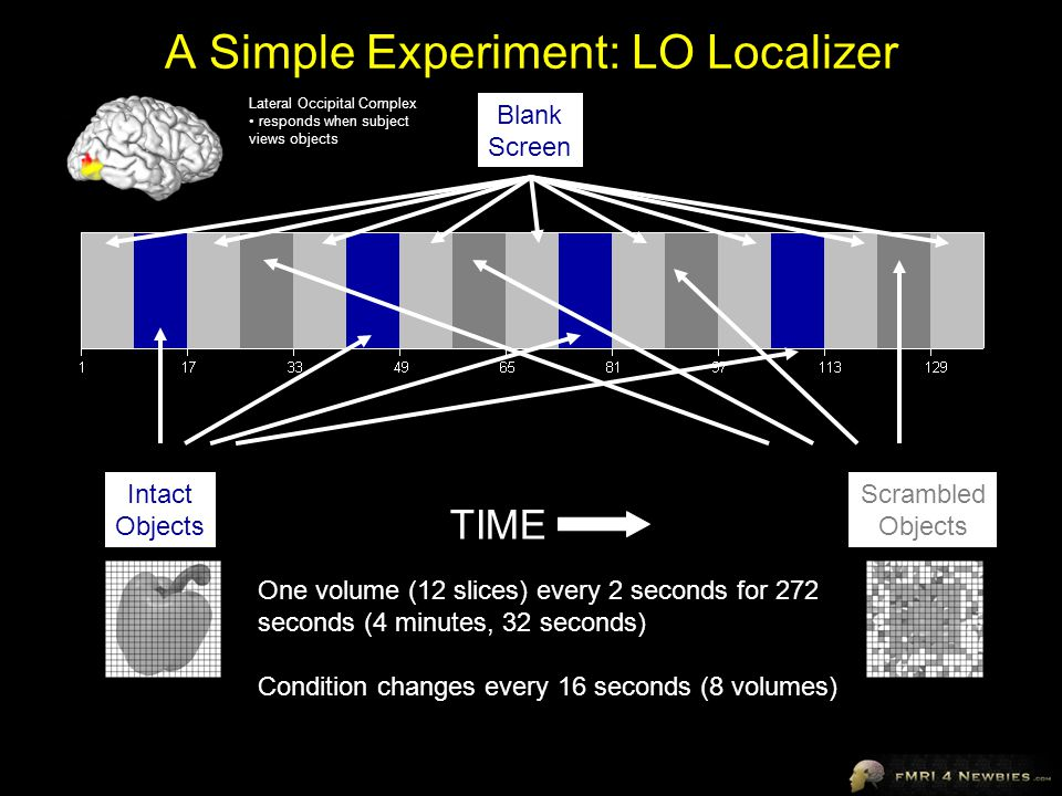 A Simple Experiment: LO Localizer Intact Objects Scrambled Objects Blank Screen TIME One volume (12 slices) every 2 seconds for 272 seconds (4 minutes, 32 seconds) Condition changes every 16 seconds (8 volumes) Lateral Occipital Complex responds when subject views objects