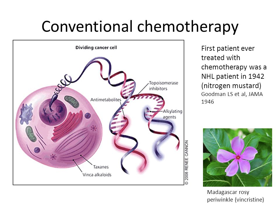 Conventional chemotherapy Madagascar rosy periwinkle (vincristine) First patient ever treated with chemotherapy was a NHL patient in 1942 (nitrogen mu