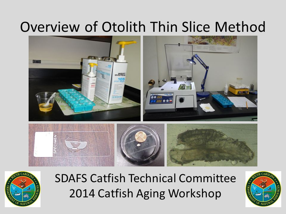 Overview of Otolith Thin Slice Method SDAFS Catfish Technical Committee 2014 Catfish Aging Workshop
