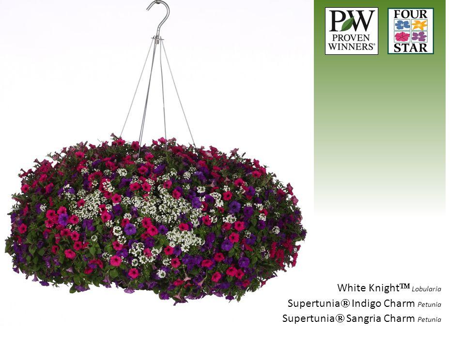 White Knight  Lobularia Supertunia  Indigo Charm Petunia Supertunia  Sangria Charm Petunia