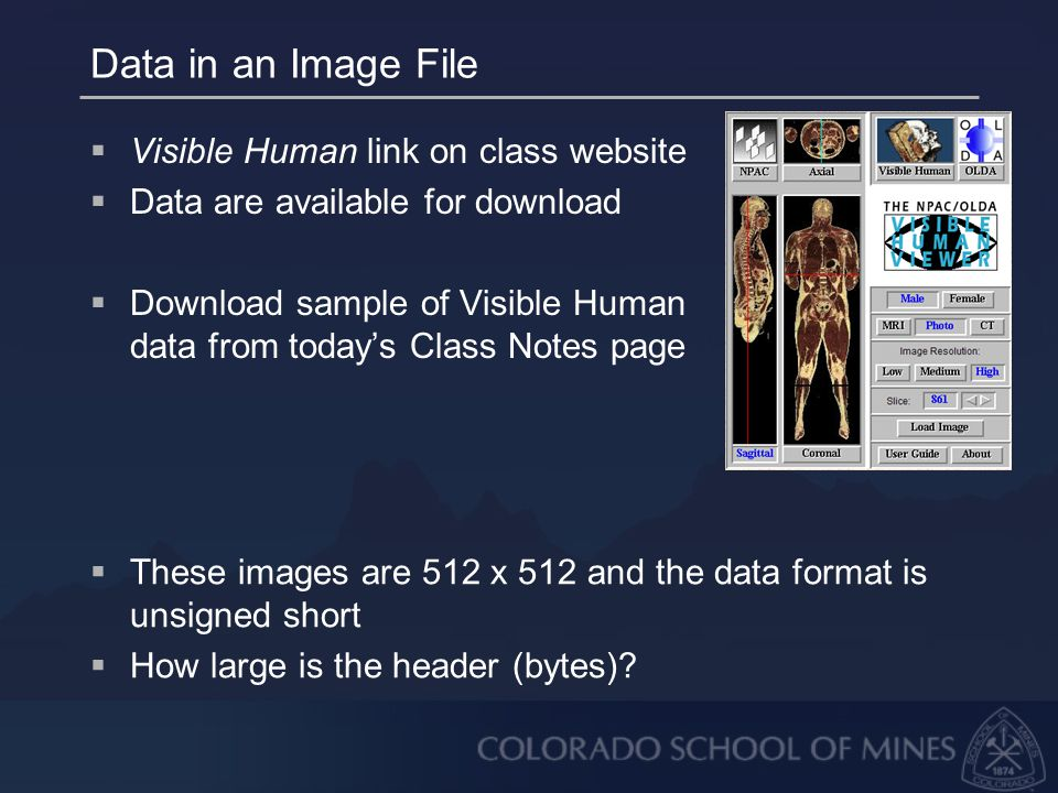 Data in an Image File  Visible Human link on class website  Data are available for download  Download sample of Visible Human data from today's Class Notes page  These images are 512 x 512 and the data format is unsigned short  How large is the header (bytes)