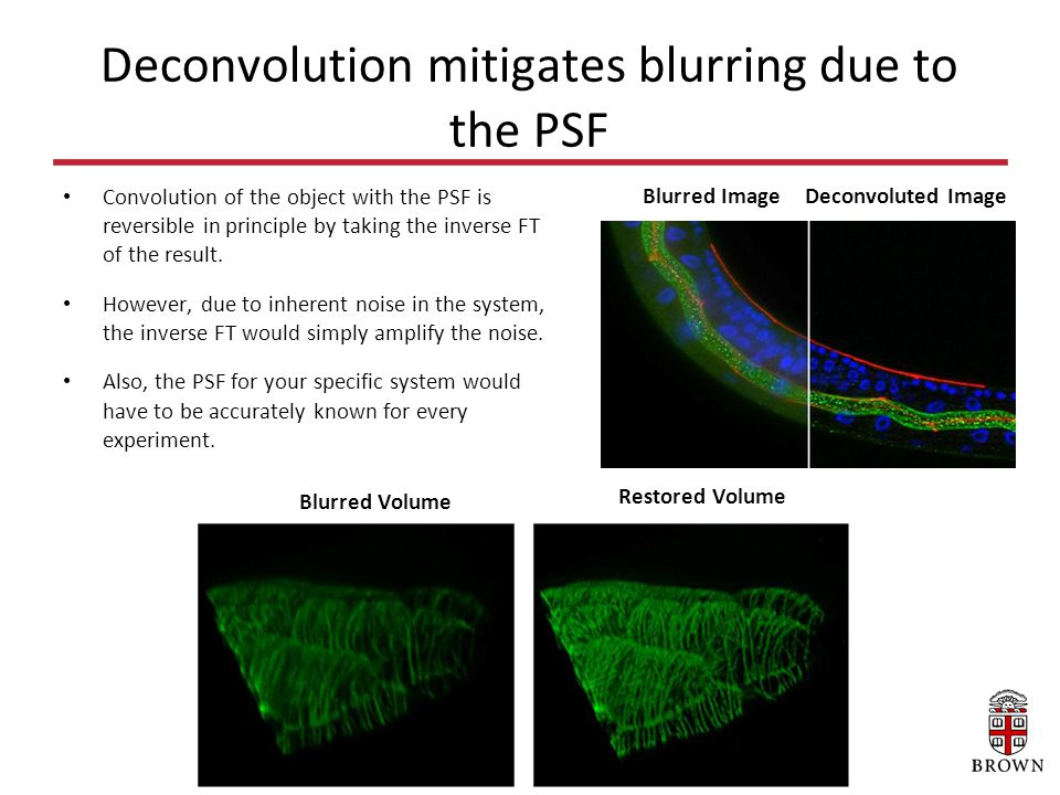 Statistical determination of the PSF from micro-fluorescent beads.