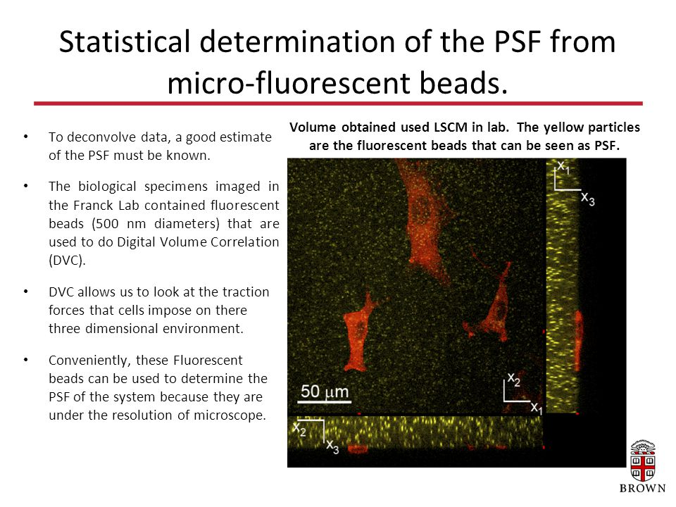 Segmentation Using Atlas-FCM [1] Confocal Microscope http://www.jic.ac.uk/microscopy/more/T5_8.htmhttp://www.jic.ac.uk/microscopy/more/T5_8.htm [2] Microscopic and Microanalysis services Microscopic and Microanalysis services [3] Automatic Morphological Reconstruction of Neurons from Optical Imaging Automatic Morphological Reconstruction of Neurons from Optical Imaging [4] Image Surface: User Guide Image Surface: User Guide [5] Blind deconvolution for thin-layered confocal imaging .