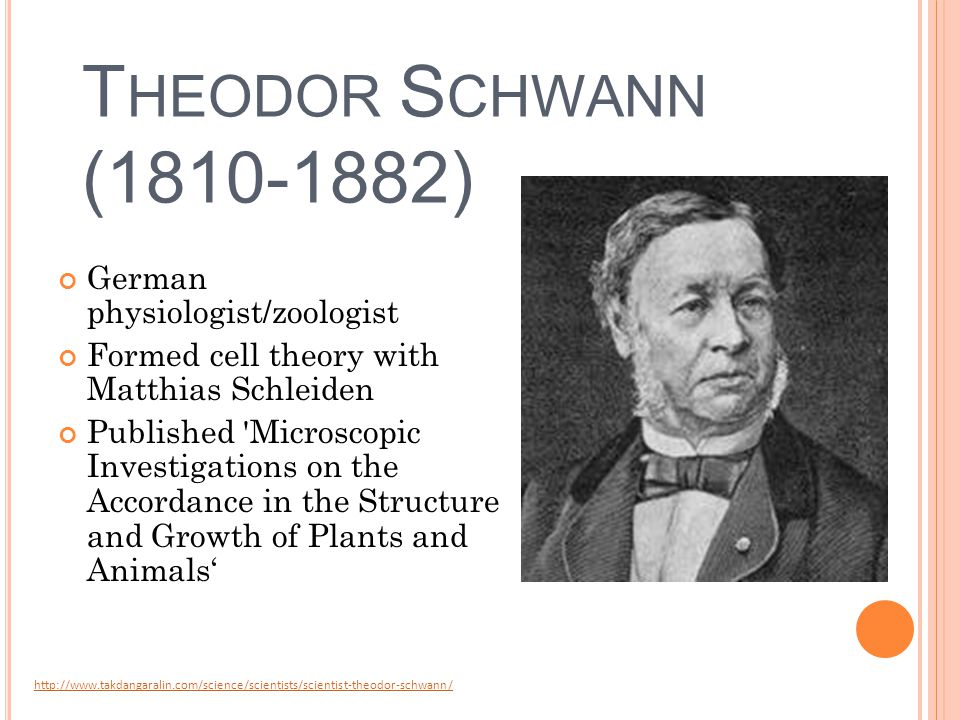 T HEODOR S CHWANN (1810-1882) German physiologist/zoologist Formed cell theory with Matthias Schleiden Published Microscopic Investigations on the Accordance in the Structure and Growth of Plants and Animals' http://www.takdangaralin.com/science/scientists/scientist-theodor-schwann/
